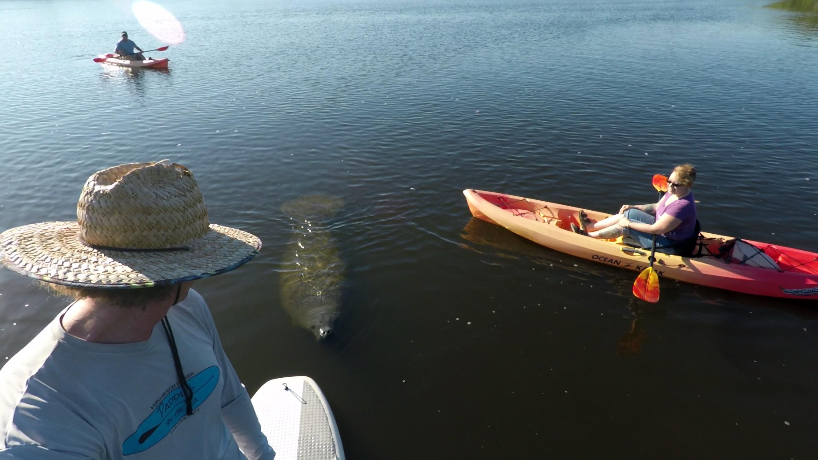 Round Island Paddle Board And Kayak Tour