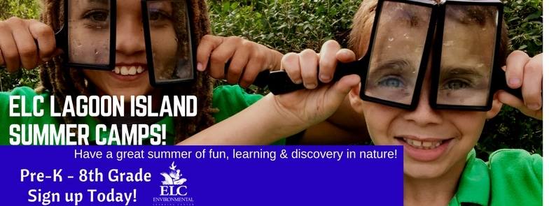 Summer Camps At The Environmental Learning Center