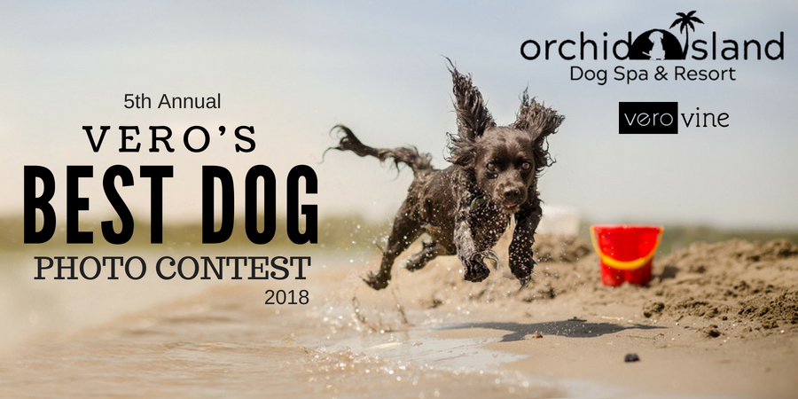Vero's Best Dog Photo Contest 2018
